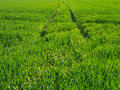 Trails in a green meadow leading to the horizon Royalty Free Stock Photo