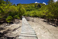 Trailway through the mangrove forest curieuse island seychelles Stock Images