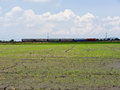 Train and field running rice landscape Stock Image
