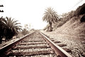 Train tracks surrounded by palm trees Stock Images