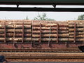 The train wagon loaded with timber spruce logs Royalty Free Stock Image