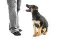 Training a dog Royalty Free Stock Photo