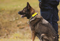 Training a police dog Royalty Free Stock Photo