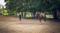 Training of young horses before the race girl rider coached in arena racehorse horse riding friendship trust and partnership Royalty Free Stock Photo