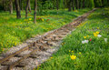 Traintracks through romantic forest train tracks with flowers Royalty Free Stock Images