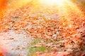 Trajeto de floresta coberto com as folhas de outono Imagens de Stock Royalty Free