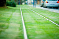 Tram railways closeup decorated by green grass the Royalty Free Stock Photo