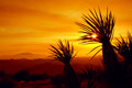 Tramonto joshua tree national park u s a Fotografia Stock