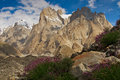 Trango Towers purple flowers Royalty Free Stock Photo