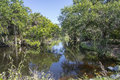 Tranquil forest creek a calm in florida Stock Photos