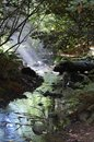 Tranquil forest scene with running brook rays of sunlight falling on a Royalty Free Stock Photos