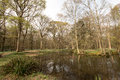 Tranquil pond in Sussex Wood Royalty Free Stock Photo