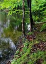 Tranquil pond trees growing by a amid the lush green of springtime Stock Photo