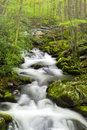 Tranquil Stream in the Smokies Royalty Free Stock Photo