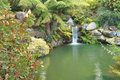 Tranquil waterfall in lush environment mt tomah australia beautiful amongst ferns proteas and other plants at nsw Stock Image
