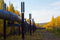 The trans alaska pipeline snakes through the hills above fairbanks in fall Stock Photography