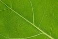 Translucent leaf wallpaper Stock Photos