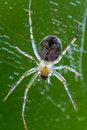 Translucent spider clear transparent glistening shiny web hairs spike black eyes Royalty Free Stock Images