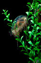 Transparent jelly fish in tank Royalty Free Stock Photography