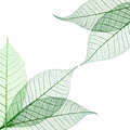 Transparent leaves composition Royalty Free Stock Photo