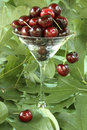 Transparent martini glass filled with red cherries Stock Photo