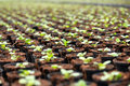 Transplanted seedlings at a nursery or horticultural farm growing in flowerpots to be sold as ornamental houseplants selective Stock Images