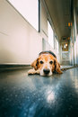 Transportation dog in railway carriage close photo Royalty Free Stock Photography