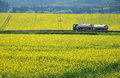 Transportation truck road oil by a through yellow canola fields Royalty Free Stock Photos