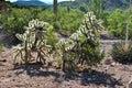 Trasy phoenix arizona pustynni kaktusowi toczni wzgórza Obrazy Stock