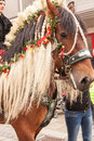 Traunstein/Deutschland/Bavaria - 06th of April: decorated horse by the Georgi's ride in Traunstein Royalty Free Stock Photo