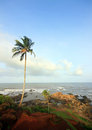 Travel India, rocky beach with coconut trees Royalty Free Stock Photography