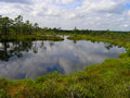 Travel Latvia: Swamp in Kemeri Stock Image