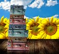 Travel to sunflower farm concept Stock Photo