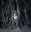 Travel to Thailand, Ayutthaya. Old tree Buddha stone sculpture. Royalty Free Stock Photo