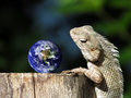 Travel tourism geography education concept the chameleon represents a person staring at the globe and planning to abroad this Stock Images