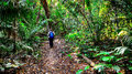 Traveler is walking on a footpath in a jungle wild Royalty Free Stock Photo