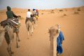 Travellers on the camels Stock Image