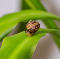 Travelling of curious snail on a leaf Stock Photography