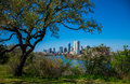 Travis Heights Overlook Amazing Tree Twisting above the Austin Texas Skyline Colorado River Royalty Free Stock Photo