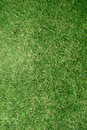 Trawa trawnika prawdziwego konsystencja Obraz Stock