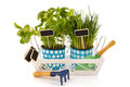 Tray kitchen herbs Stock Photo