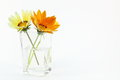 Treasure flower in a glass vase photographed on white background Stock Photography