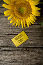 Treasure today text on yellow greeting card