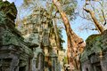 Treat of demage from growing trees on Ta Prohm Temple, Angkor, Siem Reap, Cambodia. Big roots over the walls of a temple. Royalty Free Stock Photo