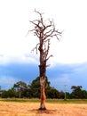 Tree 2 Stock Photo