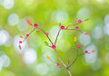 Tree with Abstract Bokeh of green color background . Royalty Free Stock Photo