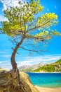 A tree on the Adriatic coast near Brela resort in Croatia.