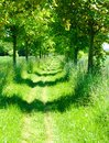 Tree alley grass path for walking in the in spring Royalty Free Stock Photography