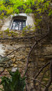 A tree on an ancient wall picture bussana Royalty Free Stock Images