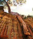 Tree in angkor swallowing ancient ruins of wat cambodia Stock Photo